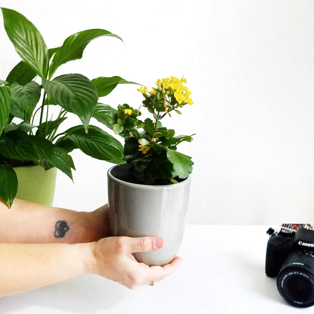 How we care for our plants after we photograph them for our blog