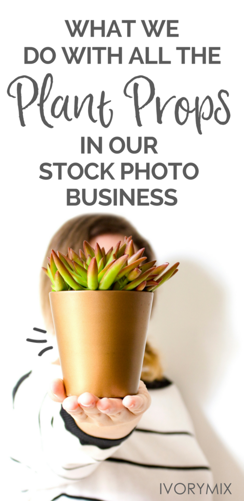 How we care for plants when we are done making stock photos